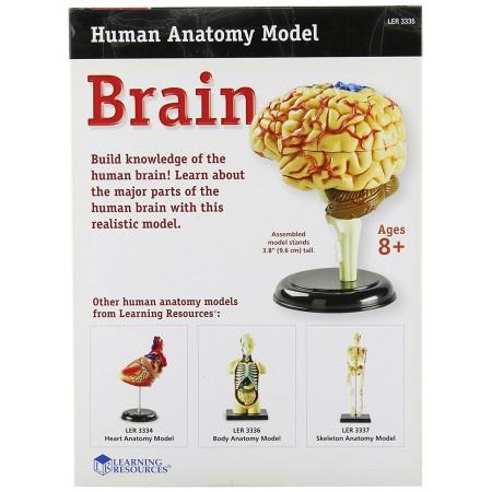Creierul uman - macheta Learning Resources