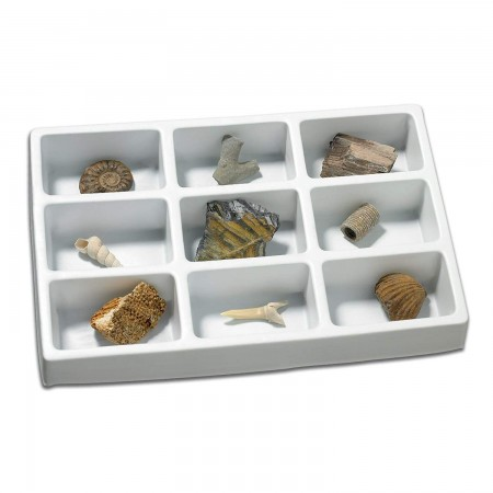 Kit paleontologie - Fosile Educational Insights