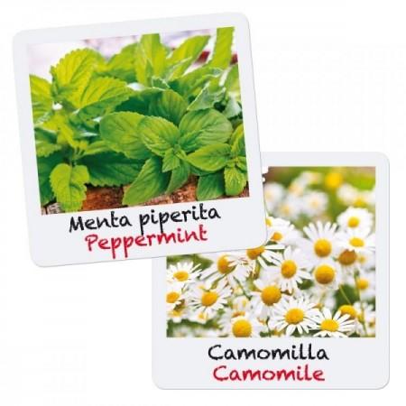 Set creativ pentru copii Gioca Green plantare si crestere Menta si Musetel Quercetti*