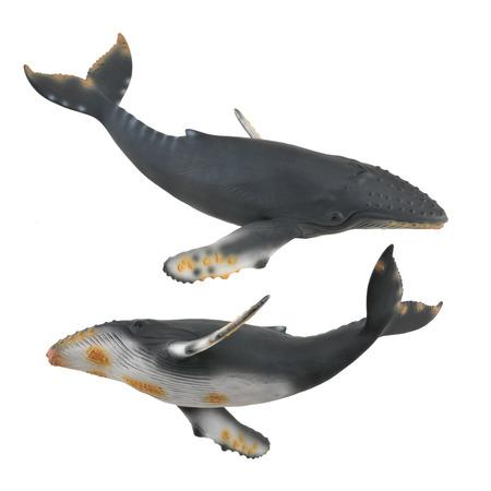Balena cu cocoasa - Collecta*