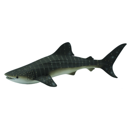 Balena rechin - Collecta*