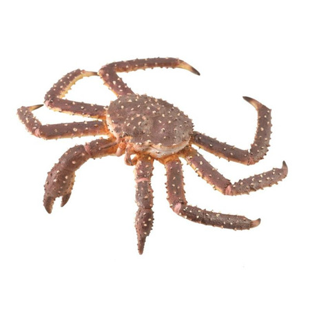 Figurina Crab Regal pictata manual XL Collecta*